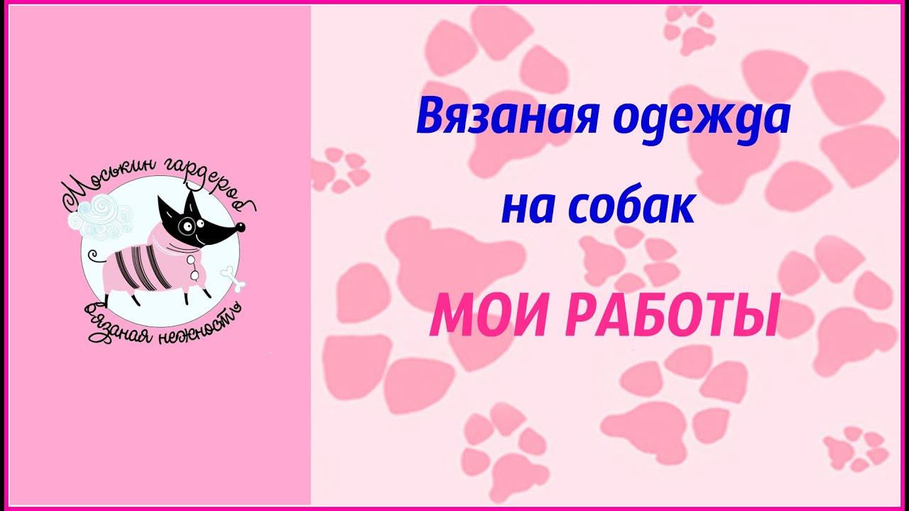 Adidog толстовка для собак!!! Одежда для собак и собачек - YouTube