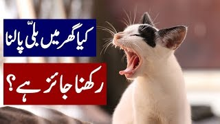 S It Okay To Keep Cat As Pet At Home  Yellow