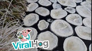 unusual-ice-forms-pancakes-on-river-viralhog
