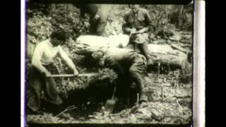 The Sikhote-Aline Meteorite - 1956