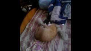 рыжий кот и воротник