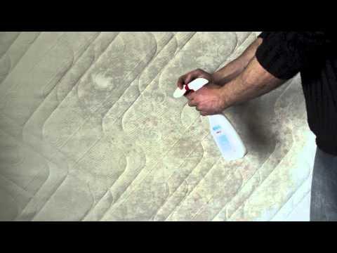 moisissure rhinorrhée