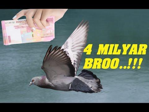 Gilaaaaa!!!! Merpati Termahal di Dunia ini Seharga 4 Milyar