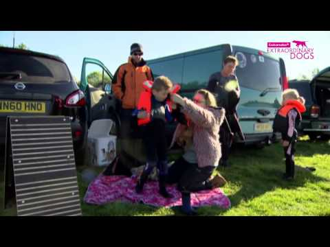 Dog rescue videos Whizz the Newfoundland helping Children   Part 1   Extraordinary Dogs