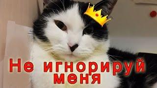 Поиграй со мной | Мужчины-коты тоже дуются на примере Еврика