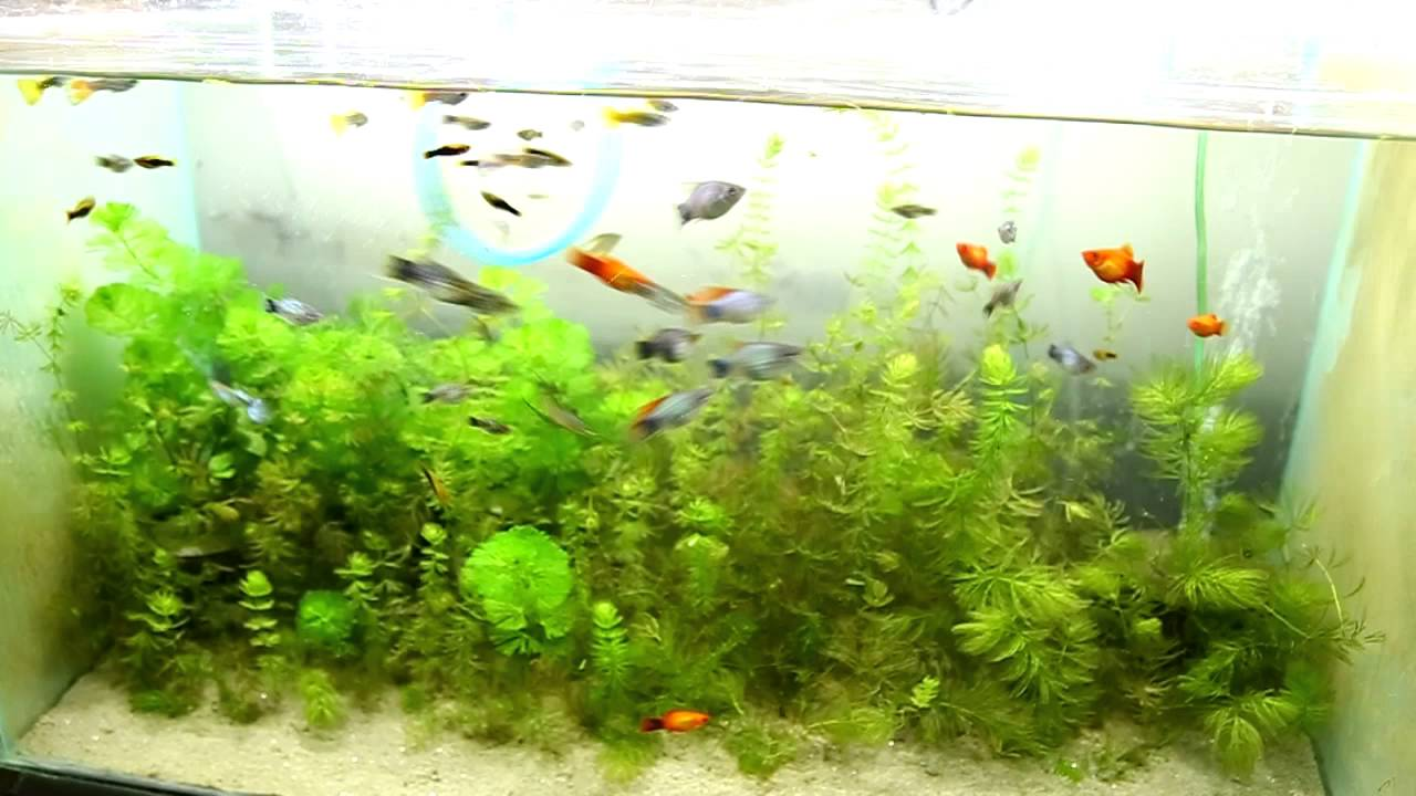 Fish aquarium in bangladesh - Amazing Planted Acquirium Of Omi Bangladesh