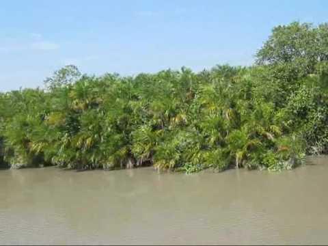 Sundarbans Cruise Safari.wmv
