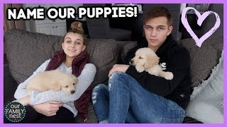 help-us-name-our-new-puppies