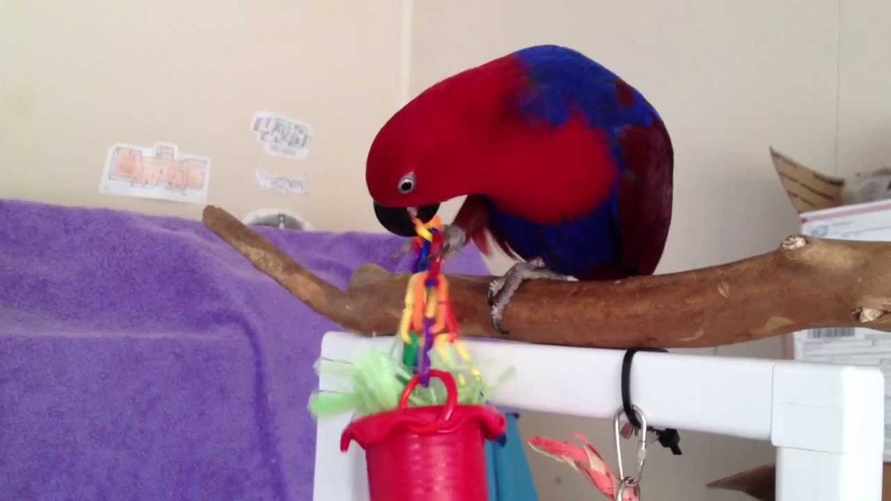 how to make homemade parrot toys