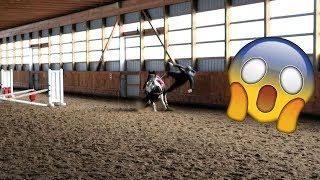 funny horse videos