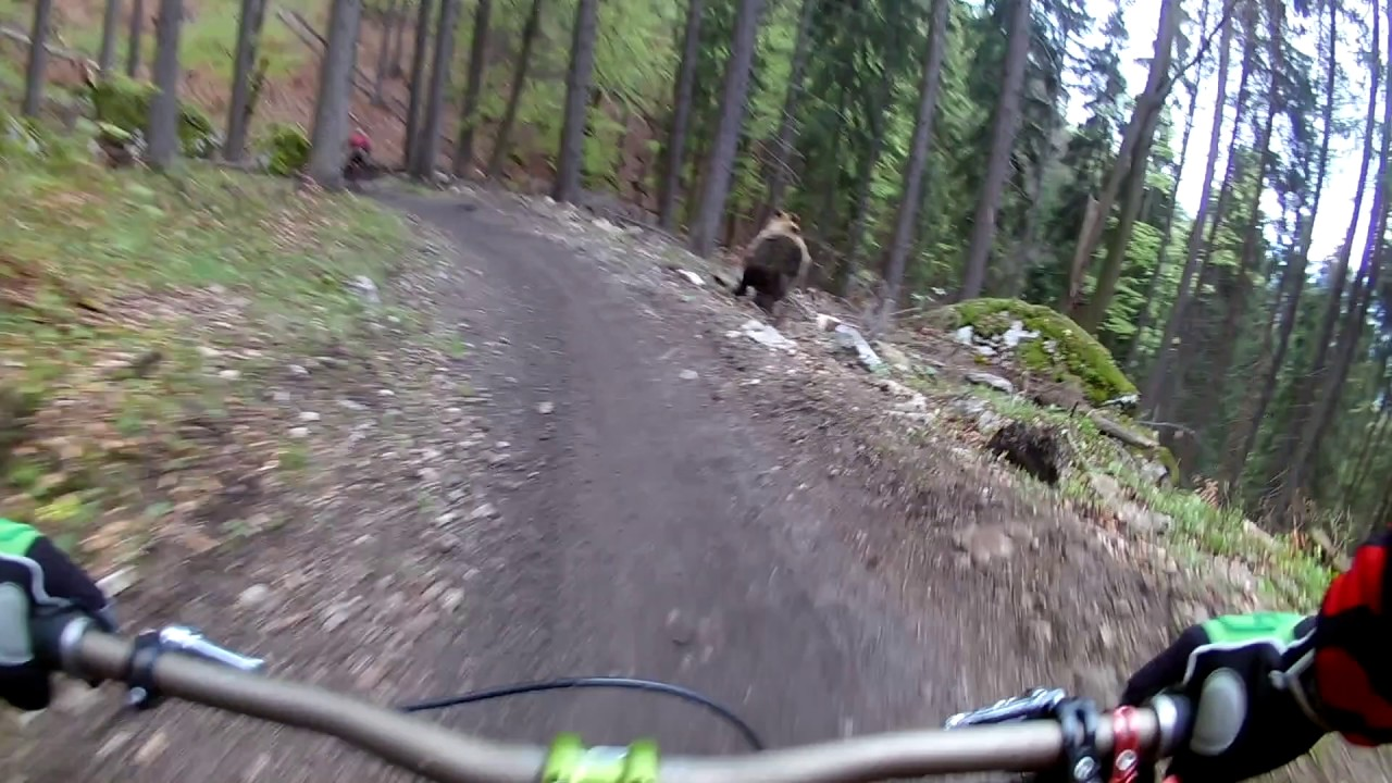 Bear on the Bikepark // SLOW MOTION  // Malino Brdo SLOVAKIA