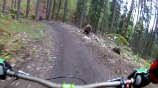 Bear chases bikers in a bike park