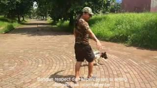 Stray Dog Rescue @ Pondok Cabe