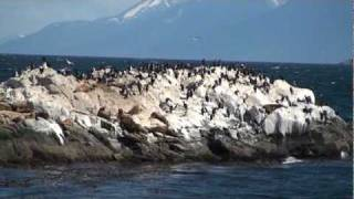 Wildlife On The Beagle Channel