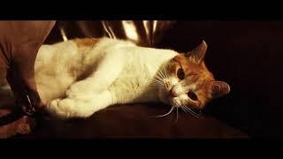 Кот идет на свидание. Говорящие коты. Cinematic mivie. Кино про животных. Видео про животных.