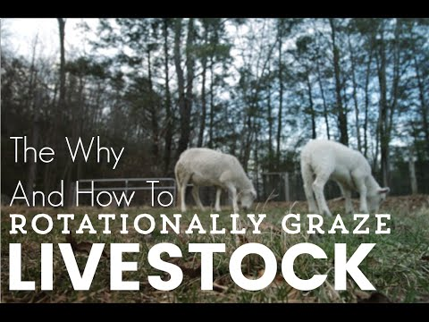 Why You Should Rotationally Graze Livestock... And HOW