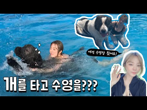 a-lady-playing-in-the-pool-on-a-dog.(there-is-a-twist!)-|-the.-first-experience-of-a-dog-pool!