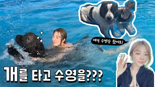 A lady playing in the pool on a dog.(There is a twist!)  | The. first experience of a dog pool!