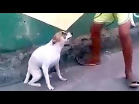 """Perro bailando """"Yeah Yeah Yeahs - Heads Will Roll"""" 1 HORA!!"""