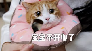 [Cat Live] How I mix snack with medicine to cheat my cats to eat