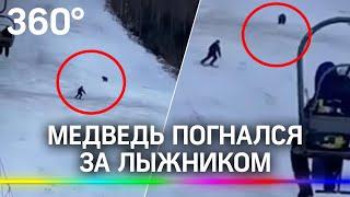 Медведь бросился на лыжника на горнолыжном склоне