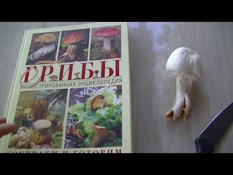 Определение грибов. Как определить съедобный или нет.