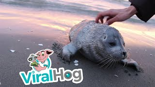 Seal Pup Gets a Good Scratch || ViralHog