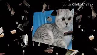 😸Британские вислоухие коты , и как ухаживать за котами )🤗🤗🤗