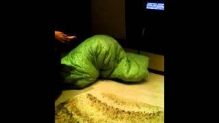 Большая живая гусеница...)(Ого какая гусеница.., 2014-07-02T18:26:34.000Z)
