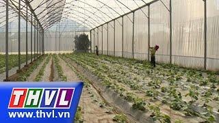 THVL l Khoa học nông nghiệp: Nhà lưới giá rẻ - Giải pháp kinh tế nâng cao chất lượng rau màu