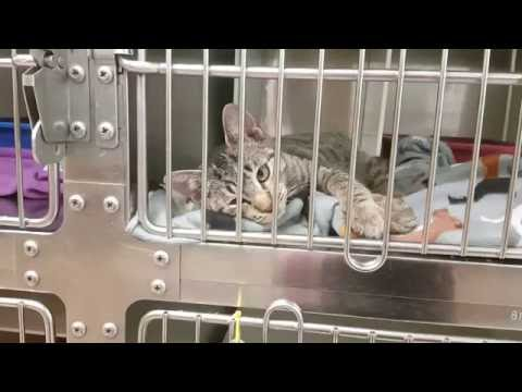 Cat Adoption Room Walk Thru 10/22/16