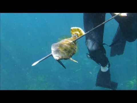 Freshwater Beach Spearfishing - Music by Jeff Potts