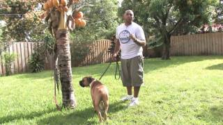 Dog Training : How To Keep A Dog From Marking Territory