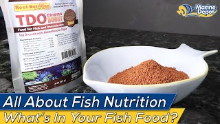 What Are You Feeding Your Fish?  All About Aquarium Nutrition!