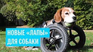 """Новые """"лапы"""" для собаки"""