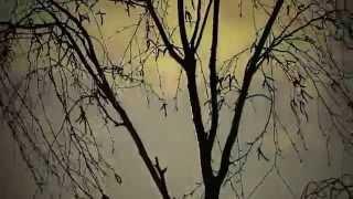 SIR - Sonne (Official Music Video)