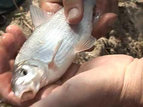 По клевым местам. Рыбалка в Константиновске