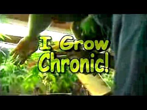 I Grow Chronic! Cannabis Hydro Cultivation (Full Tutorial)