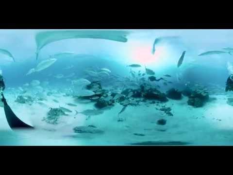 Life underwater at Lady Elliot Island