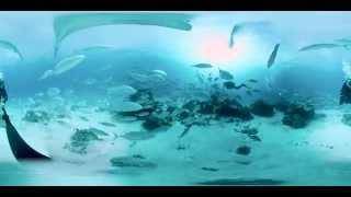 Scuba Diving, Elliot Island