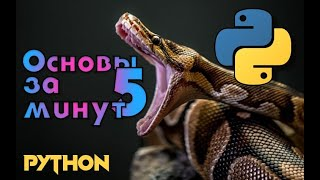 Python основы за 5 минут. Изучаем Python. Уроки Python.