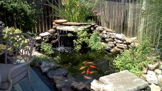 A Backyard Fish Pond