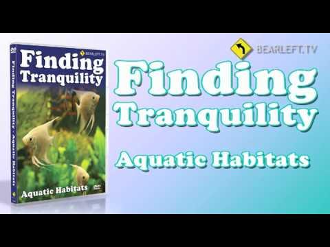Finding Tranquility - Aquatic Habitats DVD