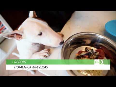 Teddy Distributore automatico di cibo per animali domestici. from YouTube · Duration:  26 seconds