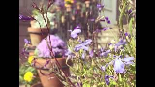 More #GlobeAmaranth?? ☺☺ #Pretty #flowers #Williamsburg #ColonialWilliamsburg #ColonialGarden #vis