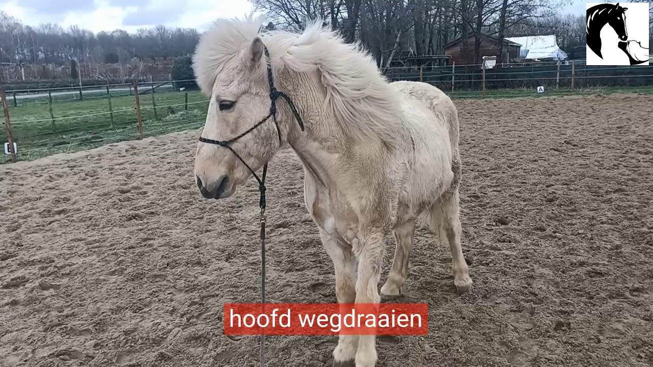 De eerste stappen met een introvert paard