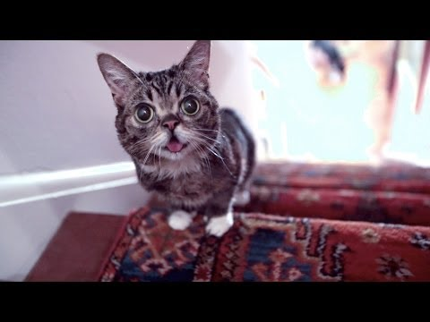 The Story of BUB's Miraculous Recovery as She RACES UP THE STAIRS