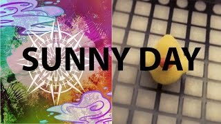 coyote kisses sunny day launchpad cover