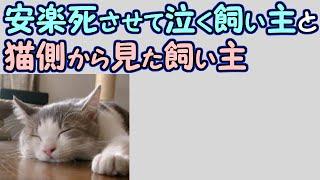 【涙腺崩壊】安楽死させて泣く飼い主と猫側から見た飼い主