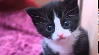 4-х недельные черно белые котята.
